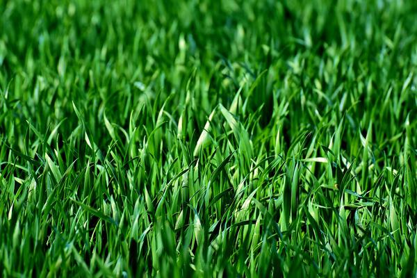 granum - nasiona traw uniwersalnych