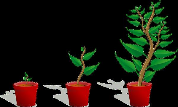 biostymulatory roślin